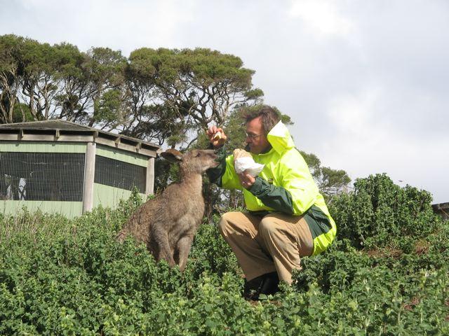 Lewis feeds a wild kangaroo